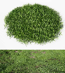 dviz Grass 07