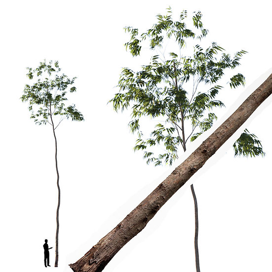 dviz Tree 16