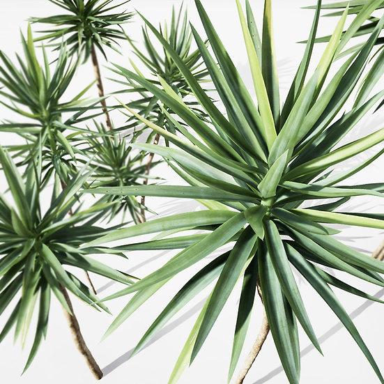 dviz Plant 18