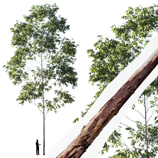 dviz Tree 01