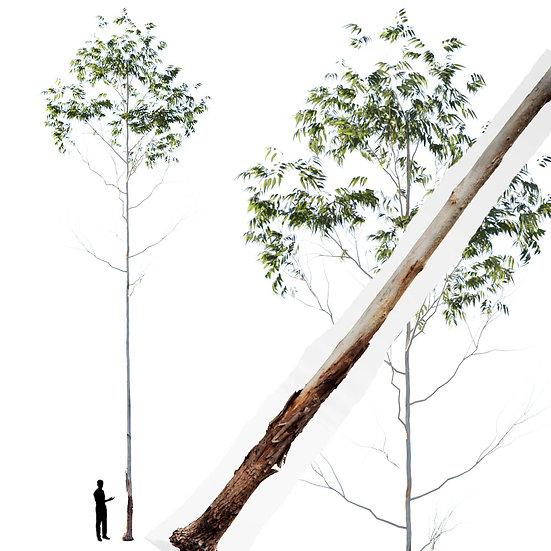dviz Tree 07