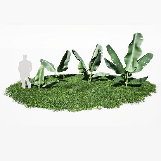 dviz Plant 09