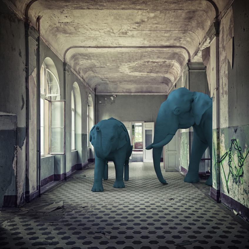 Elephants-reception-hallway