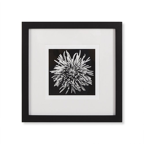 Black Blossom D (Kelly Hoppen Collection)