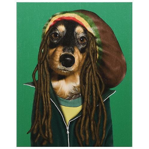 Reggae (Pets Rock Collection)