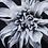 Thumbnail: Black & White Flower - Epoxy / F (Kelly Hoppen Collection)