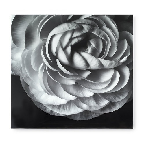 Black & White Flower - Acrylic Dry Mount / E (Kelly Hoppen Collection)