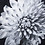 Thumbnail: Black & White Flower - Epoxy / C (Kelly Hoppen Collection)