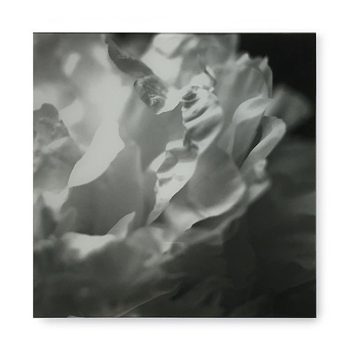 Black & White Flower - Acrylic Dry Mount / H (Kelly Hoppen Collection)