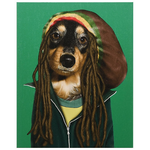 Reggae (Pets Rock Collection)