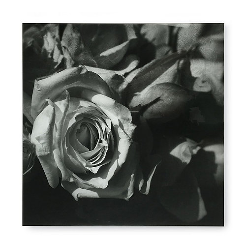 Black & White Flower - Acrylic Dry Mount / F (Kelly Hoppen Collection)
