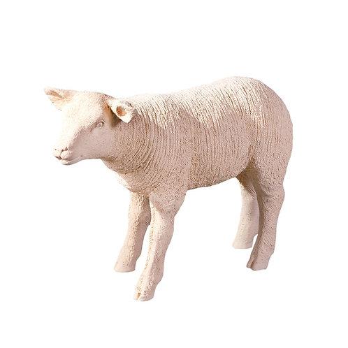 Texelaar Sheep Lamb