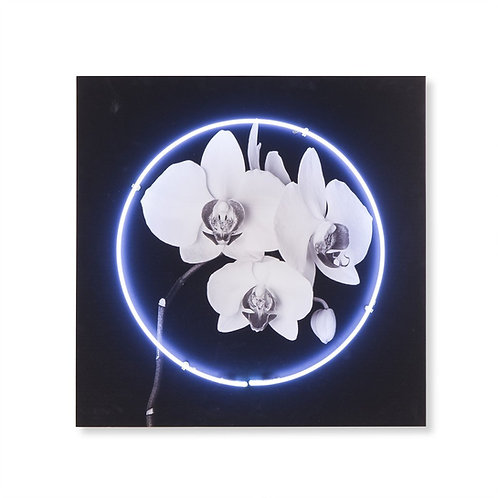 Neon Orchid (Kelly Hoppen Collection)