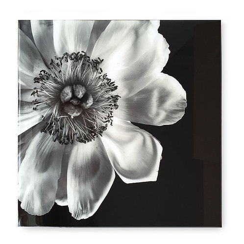 Black & White Flower - Acrylic Dry Mount / D (Kelly Hoppen Collection)