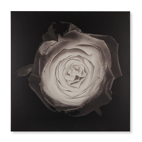 Rose (Kelly Hoppen Collection)