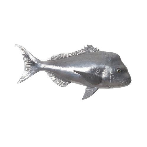 Australian Snapper Fish (More Options)