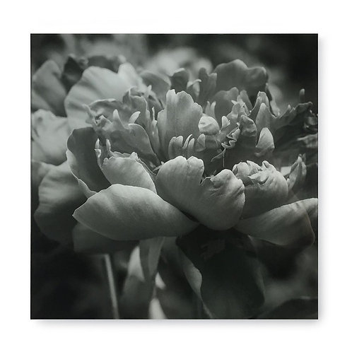Black & White Flower - Acrylic Dry Mount / I (Kelly Hoppen Collection)