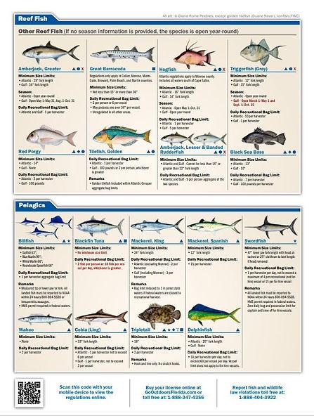 reef fish 2.JPG