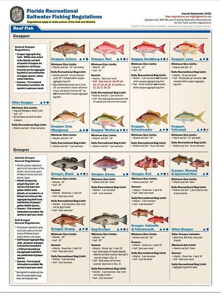 Reef fish 1.JPG