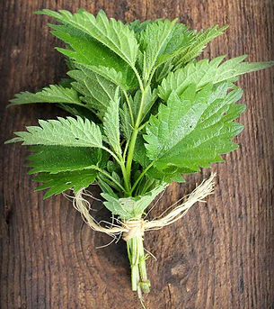 Can-Nettle-Leaves-Cure-Allergies-How-Are