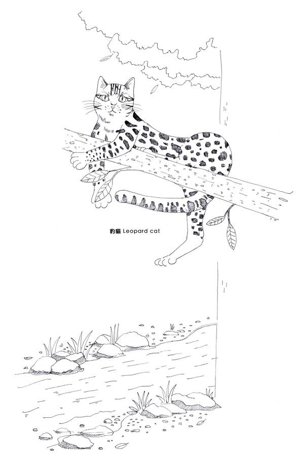 河邊樹上的豹貓