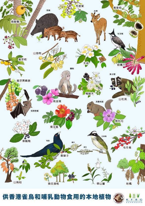 供香港雀鳥和哺乳動物食用的本地植物