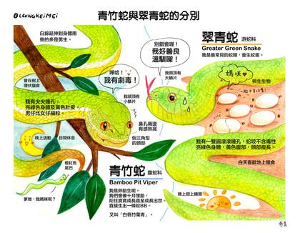 青竹蛇與小翠青的分別
