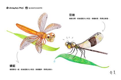 當蜻蜓遇見豆娘
