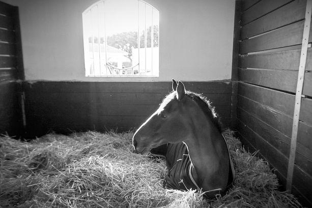 horse_stall_edited.jpg