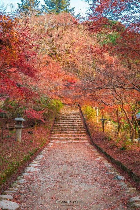 Asakura - Kyushu