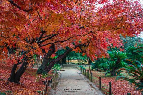 Okayama Garden - Chugoku