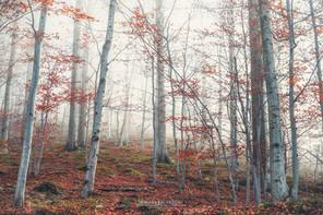 Barbottina Forest - Liguria