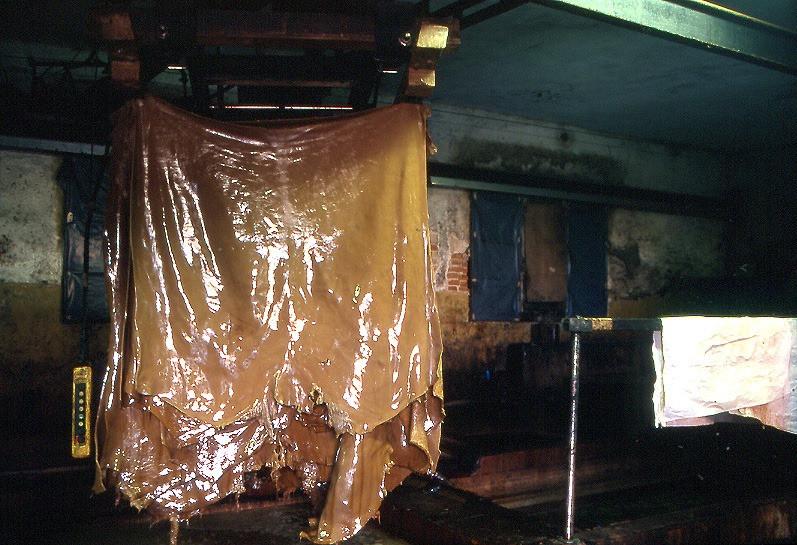 Pflanzlich gegerbtes Leder direkt nach dem Gerben mit natürlichen Gerbstoffen. In einer Gerberei in Italien