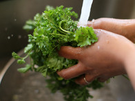 Pull in the Parsley! It's Time to Prep your Plants for Fall!