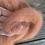 Thumbnail: Dyed Romney Roving 4 oz. rose