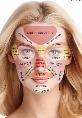 проекция органов человека
