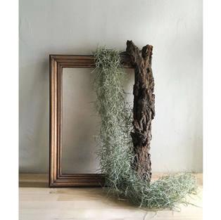 """""""the Frame"""""""