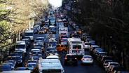 Million Trees NYC Movement: Pulse