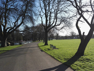 Trees and shadows in Victoria Park