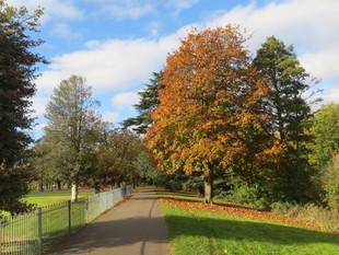 Riverside path in autumn