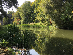 The River Leam in summer