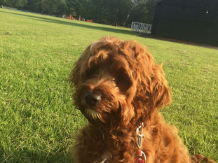 Harvey in Victoria Park