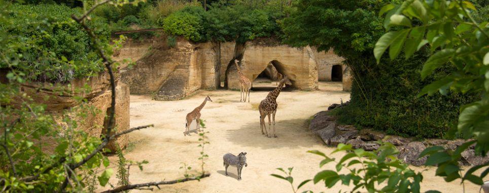Bioparc - Zoo
