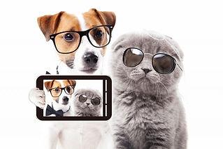犬と猫.jpg