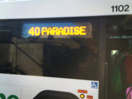 Taking a trip to Paradise