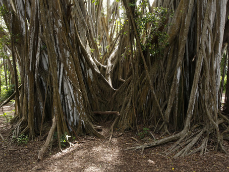 Can our roots be a source of healing?