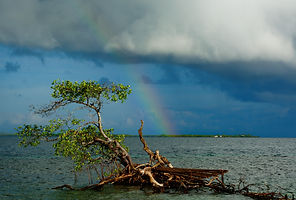 Belize Bird Island Rainbow