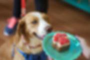 torta de perro pequeña