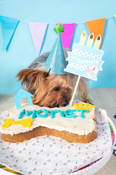 Torta para perro.jpg