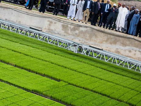 Hybrid Rice Seedling Plant in Cross River, Nigeria, to Generate N14bn Annually